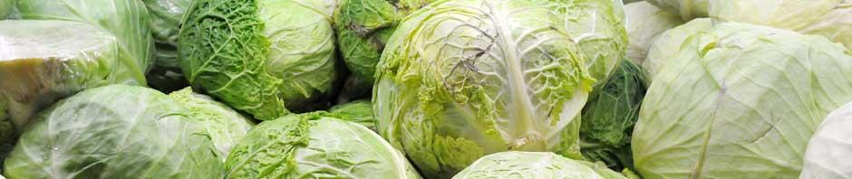 cabbage_header