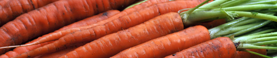 carrot_bunch_header