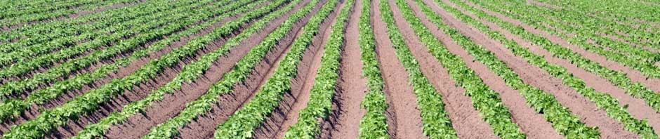 furrows_ourproducepage