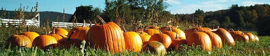 pumpkin_header
