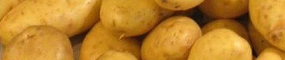 white_potato_header_2