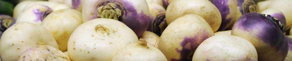 white_turnip_header